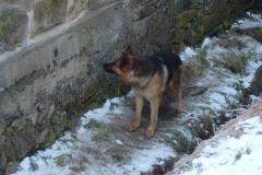 hasici-rumburk-zachrana-psa-1